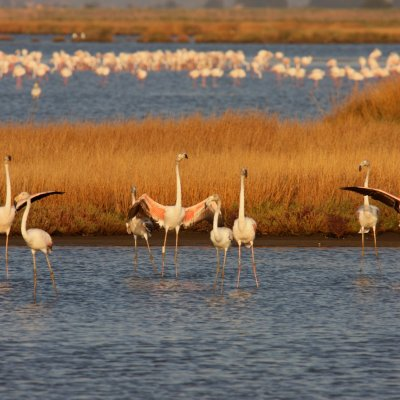 maremmagica diaccia botrona guided boat tours and birdwatching