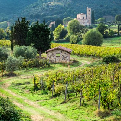 Chianti and supertuscan tour from Florence