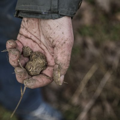 Truffle Hunt in Casentino valley in Tuscany