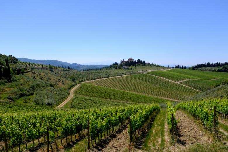 Vineyards in the Chianti