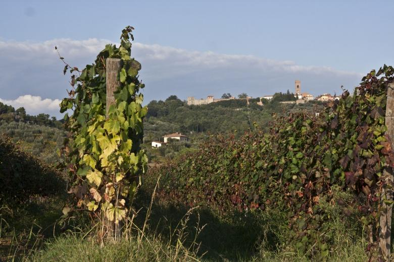 Vineyards in Montecarlo
