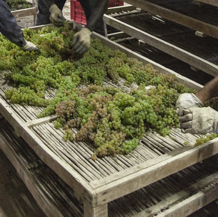 Grapes are carefully spread out on the drying mats of the Tignanello estate [Photo credits: Antinori]