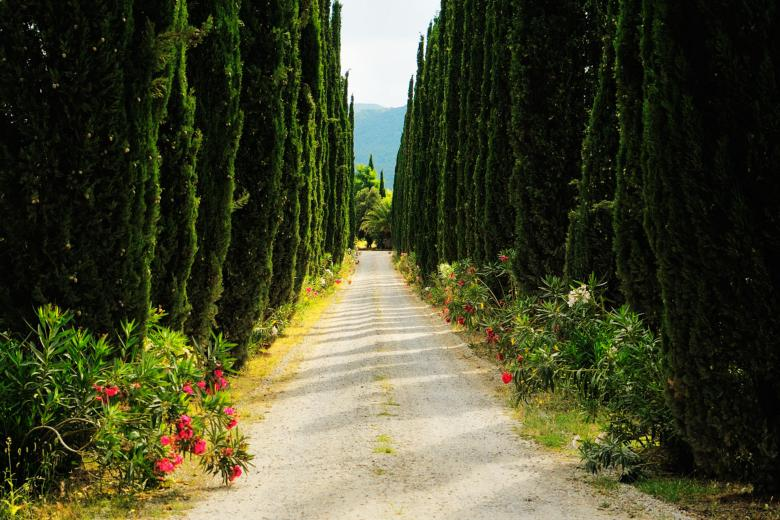 Cypress road in Bolgheri