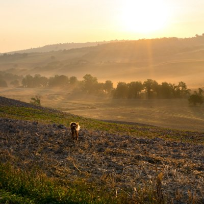 Crete Senesi at sunset, pet friendly location
