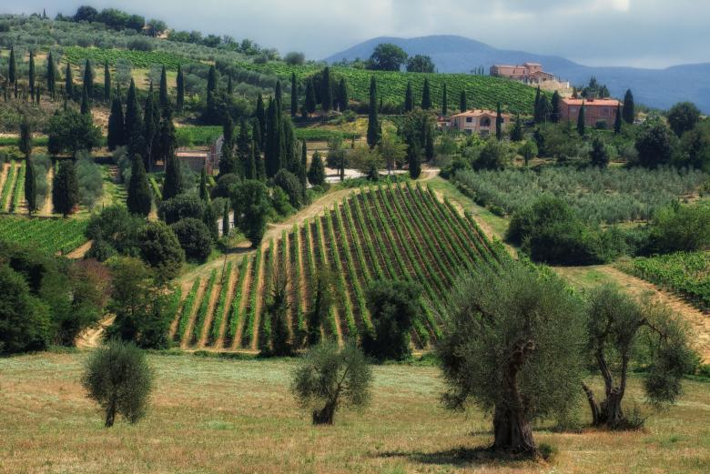Brunello vineyards around Montalcino