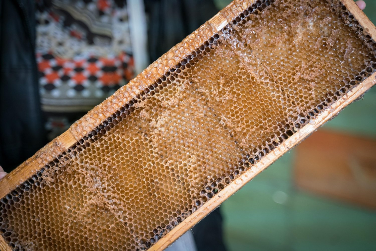 Beehive used for the Lunigiana PDO honey production